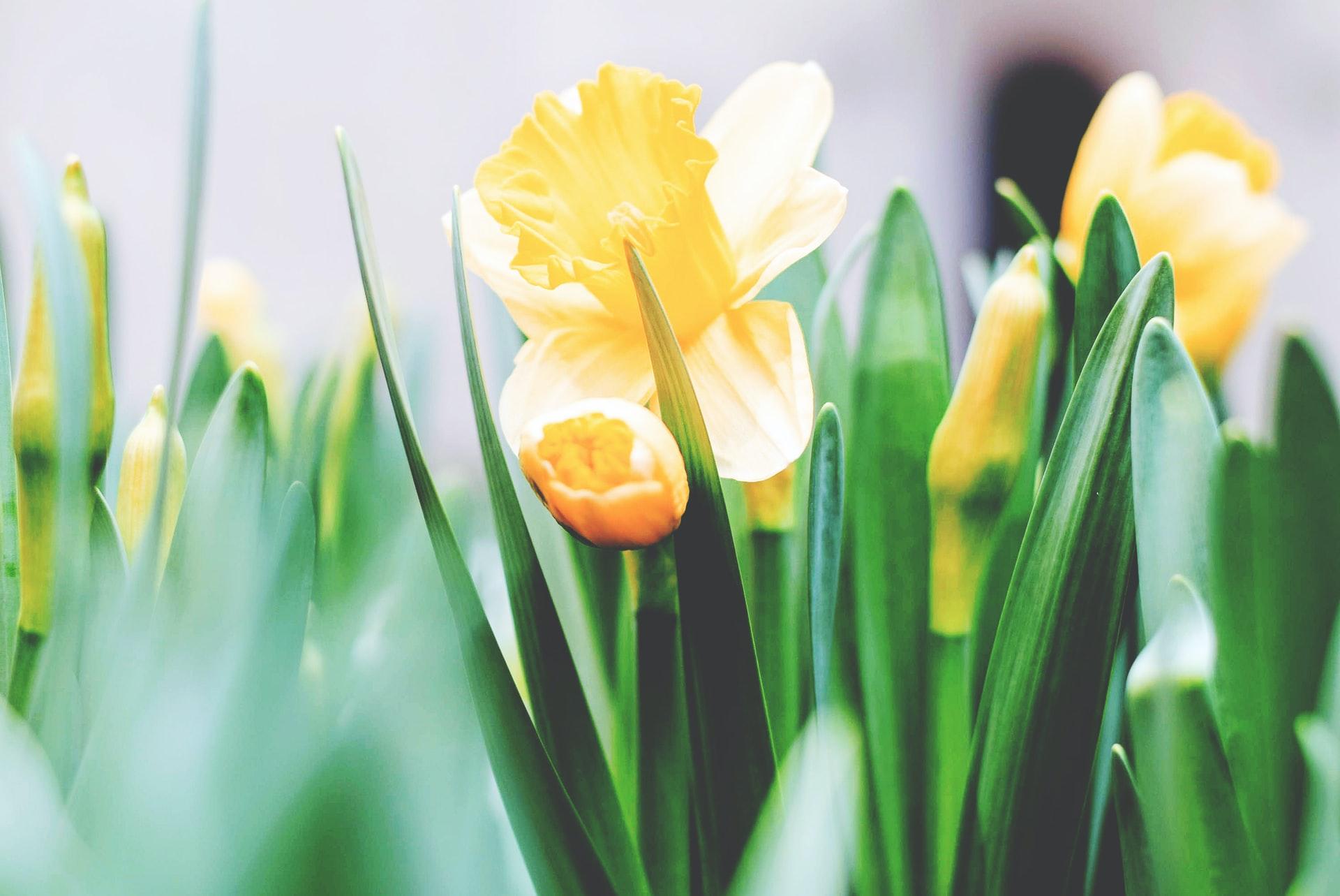 How to Prevent Garden Diseases
